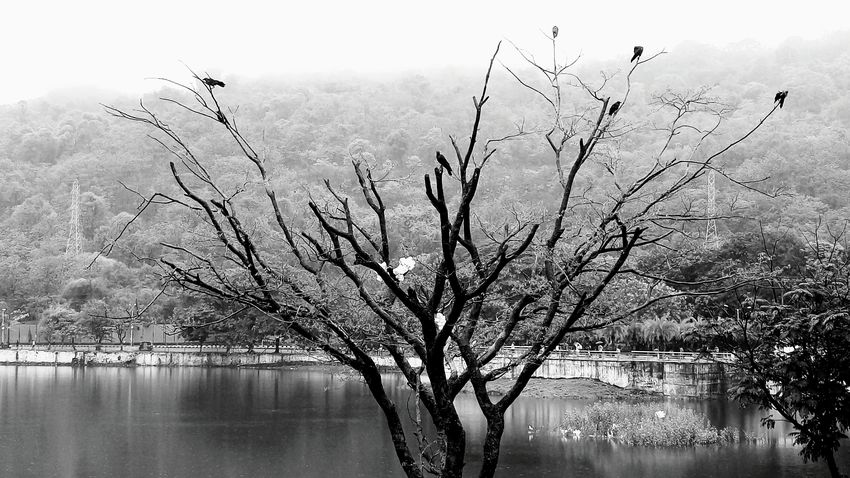 Thane Naturelovers Lovely Weather Birds_n_branches First Eyeem Photo