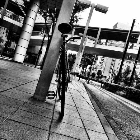Bicycle Singlespeed Fixed Gear My Bike