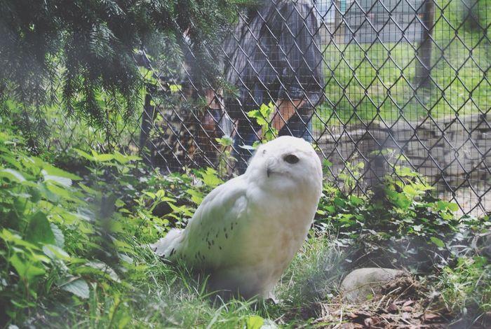 Animals Owl Hedwig