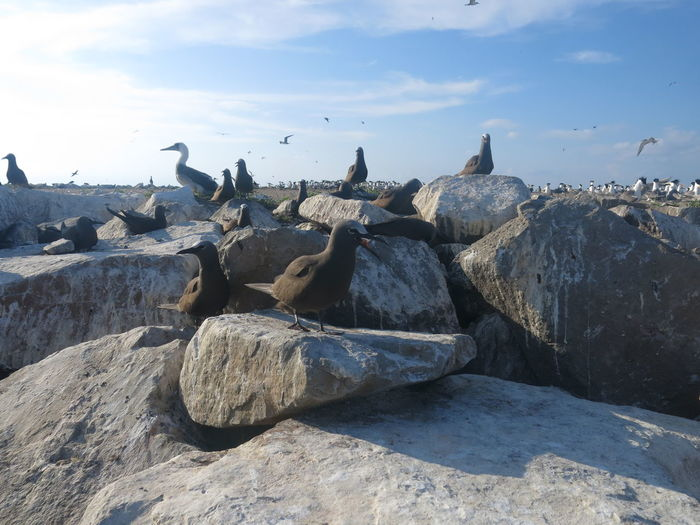 Flock of birds on rock at beach against sky