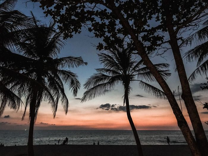 Dusk Silhouettes Of Trees After Sunset Sky After Sunset Palm Trees Palm Tree Phuket,Thailand Phuket ShotOnIphone Thailand Tree Plant Water Tranquility Beauty In Nature Sky Tranquil Scene Horizon Over Water Land Cloud - Sky Idyllic Nature Scenics - Nature Beach No People Silhouette Sunset Outdoors Sea Horizon