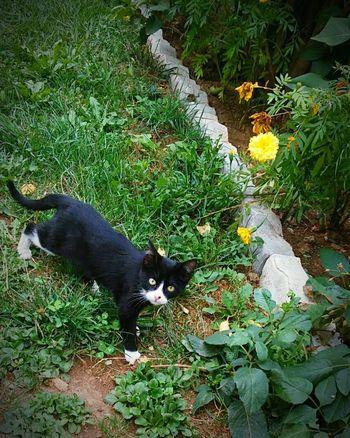 Cat Lovers Cat Eyes Batman Is In Town Beauty EyeEm Animal Lover Rebelle Green Grass Escaping