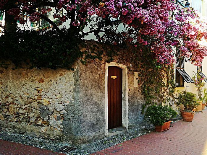Varigotti Liguria Italy Baia Dei SaraceniHanging Out Taking Photos Relaxing Door Enjoying Life Summertime Travel Tree Home Travel Photography Flowers Wall Old Rock Wall