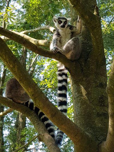 aapjes kijken Tree Forest Sky Zoo Monkey Branch
