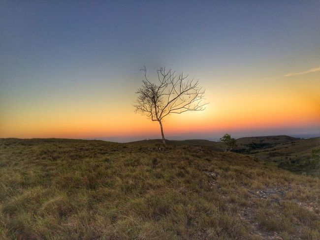 Afternoon Colors Sky Magic Hour Beautiful Beautiful Day Colorful Sumba Timur INDONESIA Tree IPhoneography