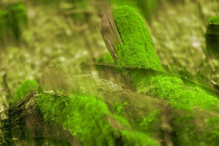 Moss Motion