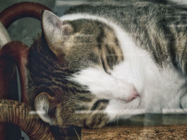 Finding Nagasaki Cat : Sleepy Kitty Petcat Somewhere Nagasaki City. Reedit Cat Lovers Animal Portrait V-LUX1 50mm F/5.6 寝子
