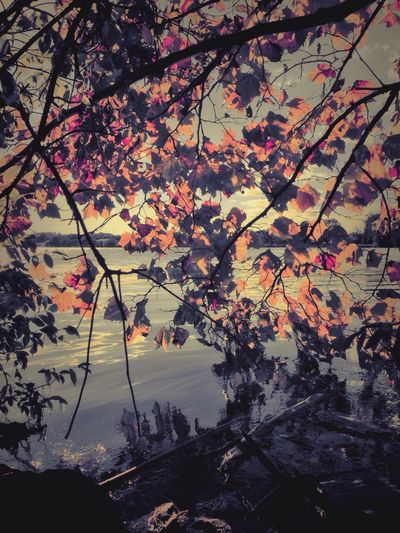 Occoquan Bay National Wildlife Refuge -- Take Refuge from city living Bay Sea Autumn Autumn Leaves