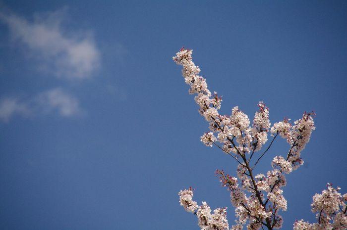 EyeEm Tokyo Meetup 3 EyeEm Nature Lover EyeEm Best Shots - Flowers The Sky