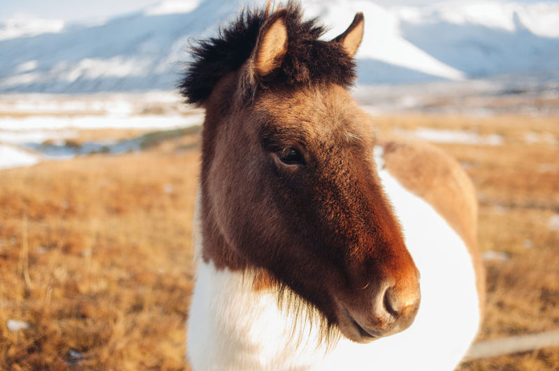 Close-up of horse on field during winter