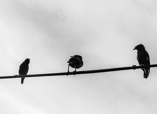 Hello odd one. Instadaily Instagood Instapic Instagram Odd Inspiration Cool Urban Bird Nature Animal Shots Bw Blackandwhite POTD Photooftheday Grid Good Weather Naturephotography Birdgang EyeEm