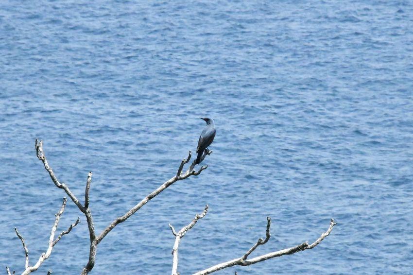 Animals In The Wild Animal Wildlife Bird Animal Themes Animal Vertebrate Water