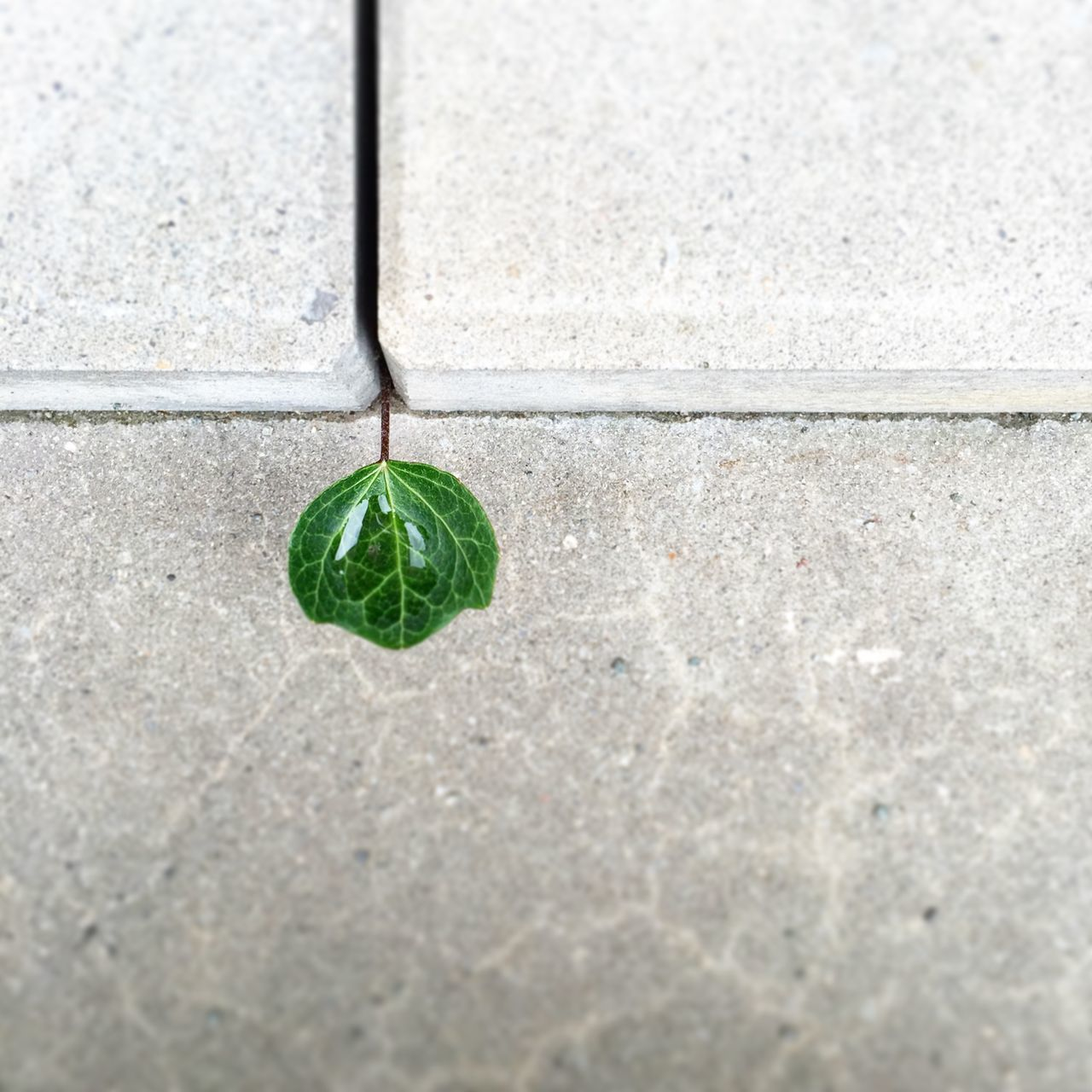 Close-Up Of Water Drop On Leaf Against Wall