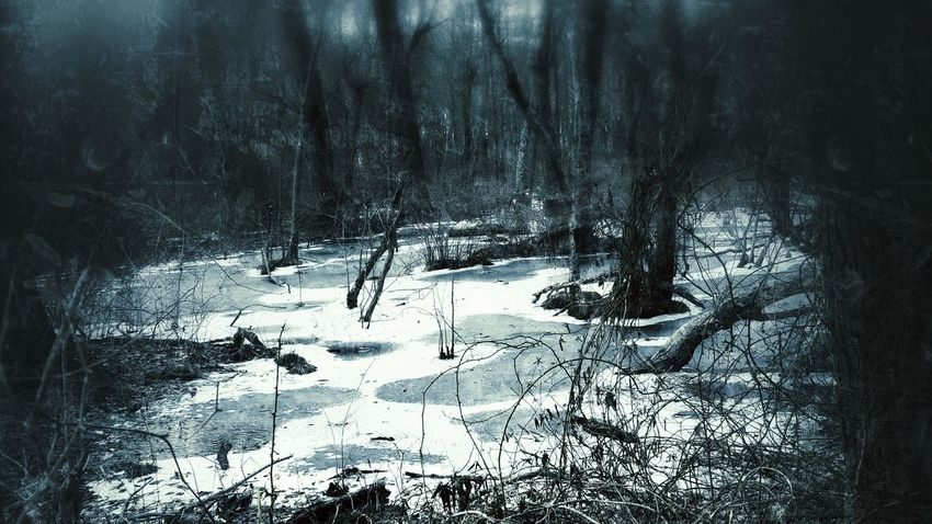 """The silence was unbroken..."" Nature Nature Photography Dark Darkness Trees Woods The Raven Edgar Allan Poe Death Adventure Snow Ice Frozen Winter"