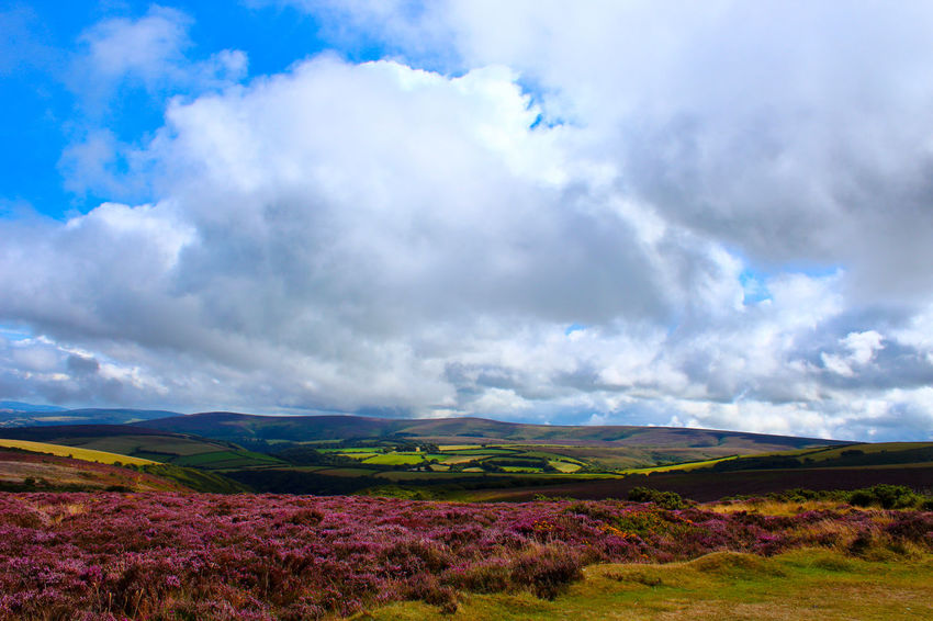 Exmoor National Park, UK Beauty In Nature Clouds And Sky Exmoor Nationalpark Landscape Landscape_Collection Landscapes Nature Porlock Rural Scene Scenics Sky And Clouds Summer Travel Destinations Wildflower