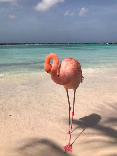 Flamingo EyeEm Selects Water Sea Land Beach Sky Animal Beauty In Nature Pink Color Sand Bird Horizon Over Water No People Flamingo One Animal