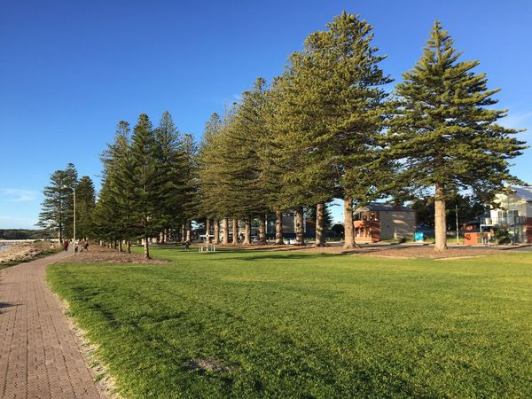 The beach front at Victor Harbour Beach Side Tow Blue Sky Grass Grassland Grassy Growth Norfolk Pines Path Seaside Trees