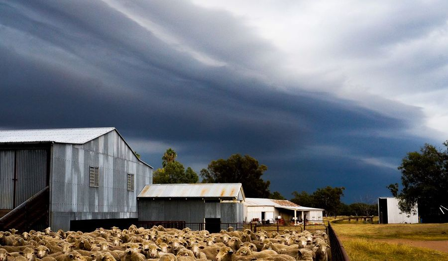 Are we ready for this fast moving storm? Agriculture Storm Cloud Rain Farm Life Sheep🐑 The Great Outdoors - 2017 EyeEm Awards Investing In Quality Of Life