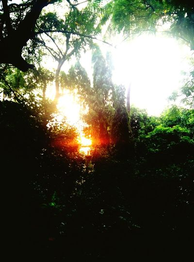 Sunsetlover Sun