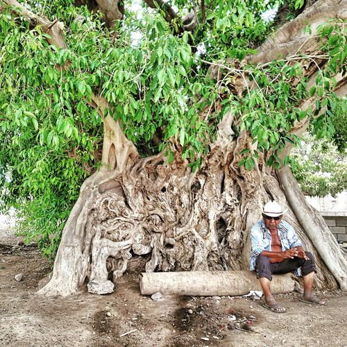 A break on a looong walk!! Old Man Tribe Member Yaqui Ficus Tree Old Tree Taking A Break Sitting Alone Lifestyles Person Green Color Outdoors Mature Adult Tree Plant Day Nature