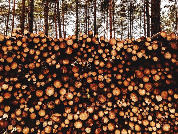 Trees Tree EyeEm Nature Lover Nature EyeEm Best Shots Wood Brown Nature_collection Forest EyeEm IPS2015Trees Market Bestsellers June 2016 Bestsellers