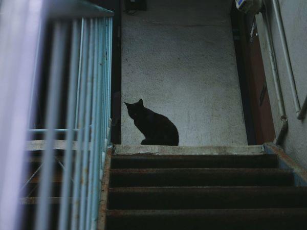 Phantom Cat BLackCat Dark Shadow Phantom Black 猫 黒猫