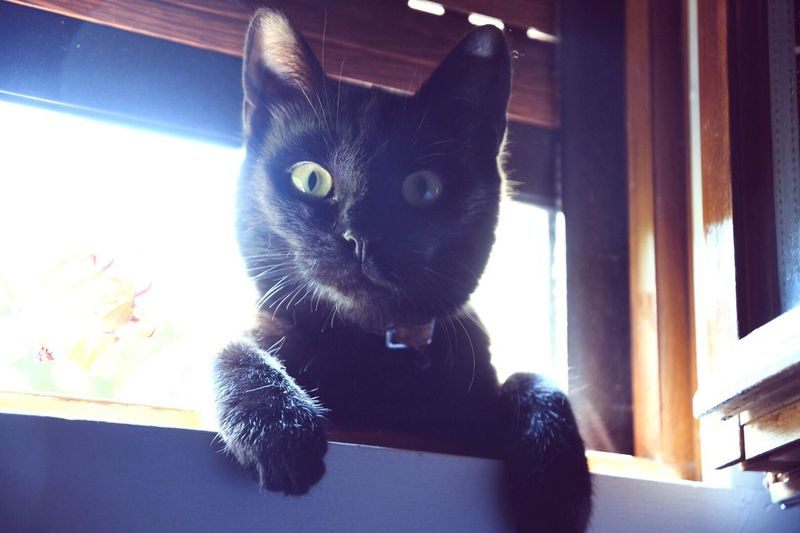 Domestic Cat Pets Animal Themes Domestic Animals Feline One Animal Mammal Indoors  Whisker Window No People Day Sitting Close-up