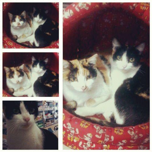 CasadoFazendeiro Cats Jagua Menina