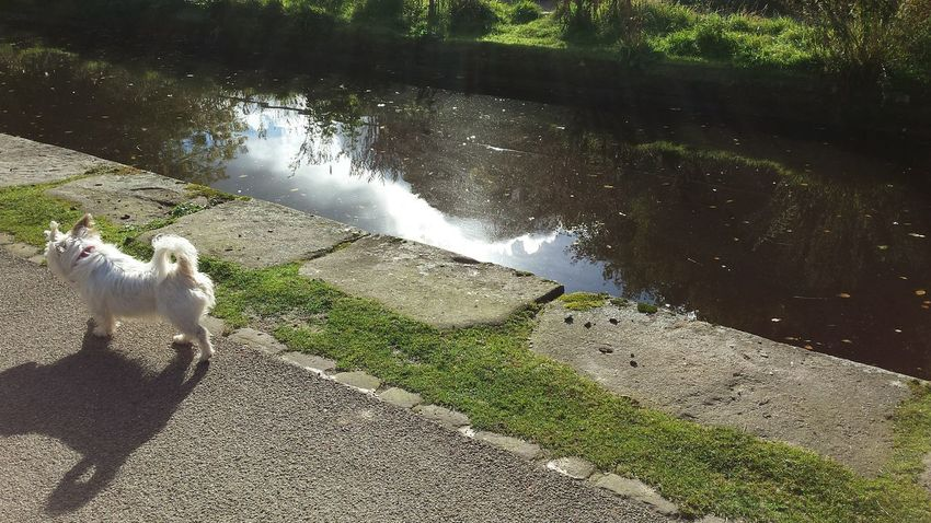 I Love My City because even the dogs are independent here Capture The Moment Dog Dog Walk Canal Path Water Happyvalleyhebdenbridge Landscape Water Reflections