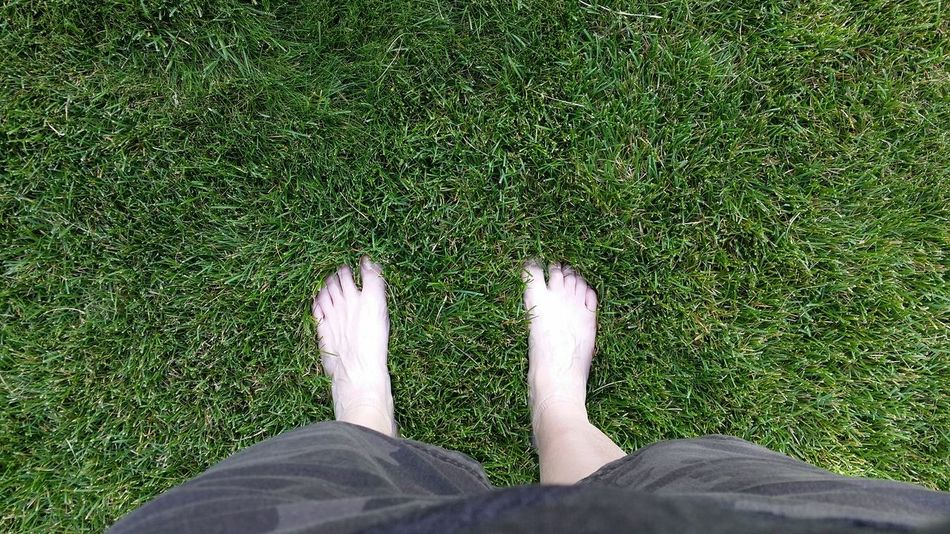 Green Green Grass Grass Feet Barefoot Feet On The Ground Feet In The Grass Comfortable Grounded
