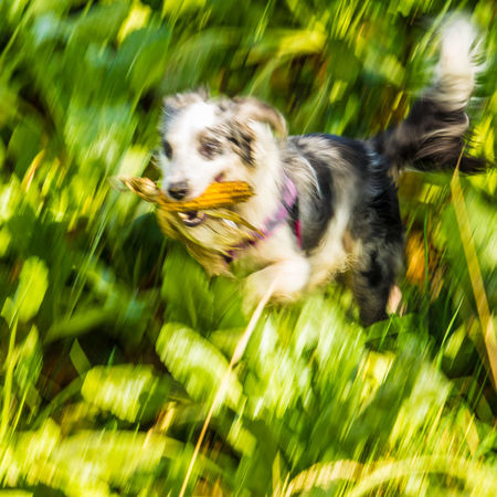 Activity Blurred Motion Day Dog Domestic Animals Motion Nature One Animal Outdoors Pets Running Speed
