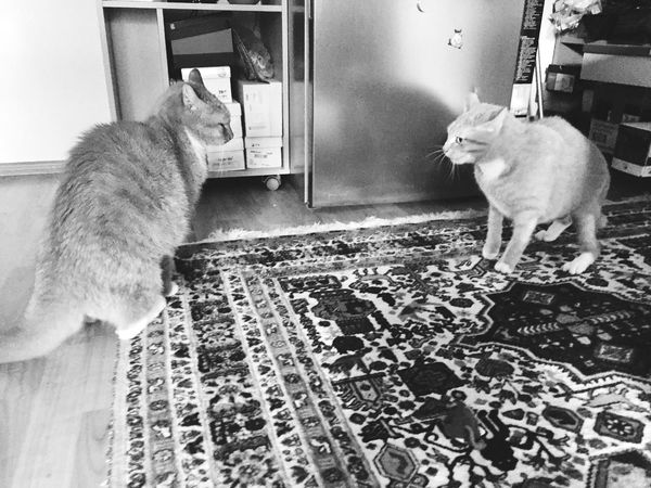 Two Cats On The Floor 3XSPUnity Pets Black And White Photography Black And White Collection  Black And White Cat Portrait