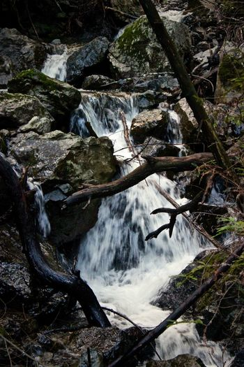 Hiking Mt Tam San Antonio Beauty In Nature Close-up Day Freshness High Angle View Motion Nature No People Outdoors River Scenics Sky Tranquil Scene Tranquility Tree Water Waterfall