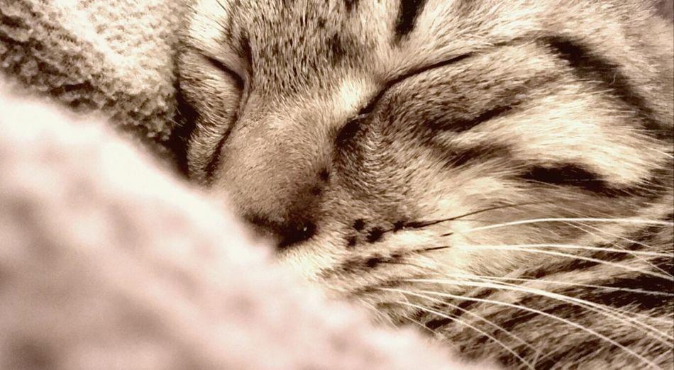 Light And Shadow Cat Sleeping Rahul