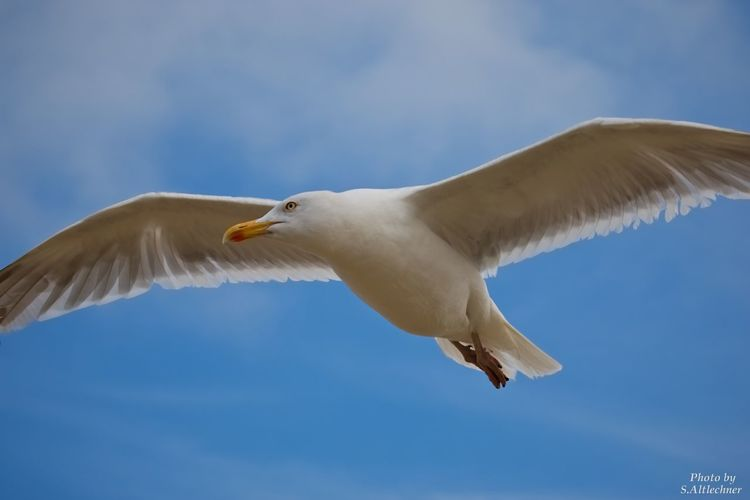 Animals In The Wild Bird Flying Möwe Nature One Animal Seagull Sky Wildlife EyeEm Foto EyeEm Nature Lover Traveling Home For The Holidays