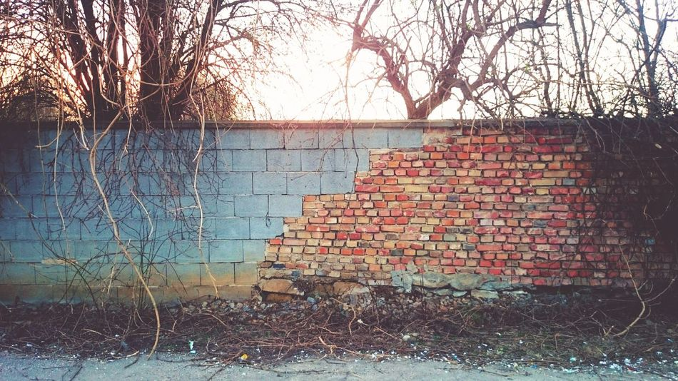 Wall Brick Wall Old Vs New Old Wall Bricks Repaired Twigs Branches Shine Sunset Tree Silhouette Streetside Drive By Shooting Mosaic Leading Lines Broken New Beginning Vintage Do It Yourself Architecture Backgrounds My Favorite Photo Pivotal Ideas Beatifully Organized My Year My View