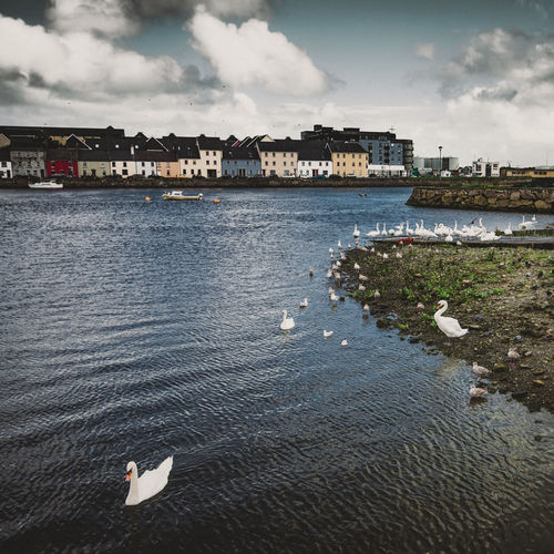 Architecture Beach Bird Birds Building Exterior Built Structure City Cloud - Sky Clouds Colorful Houses Day Galway City Ireland Nature Nautical Vessel No People Outdoors Rippled Sea Seagulls Shore Sky Swans Travel Destinations Water