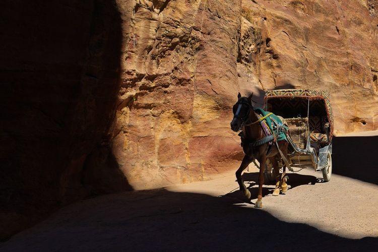 Horse carriage run through shadows and highlights at bab al siq alley, petra