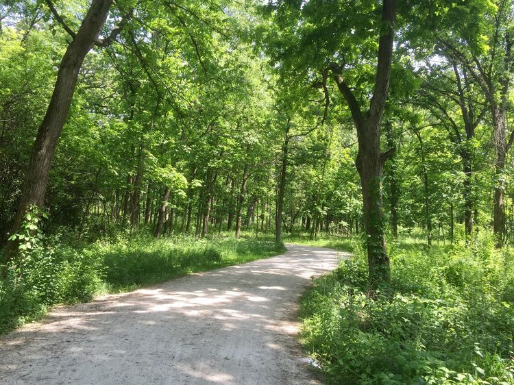 Walking in the Woods Tree Nature The Way Forward Forest Growth Tranquil Scene Outdoors Scenics Green Color Beauty In Nature Sunlight Road Summer Landscape Freshness Path Trail Diminishing Perspective Herrick Lake Illinois WoodLand Wetland Tree Trunk Tranquility Nature Reserve