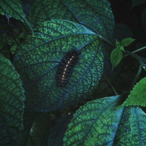 High angle view of insect on plant