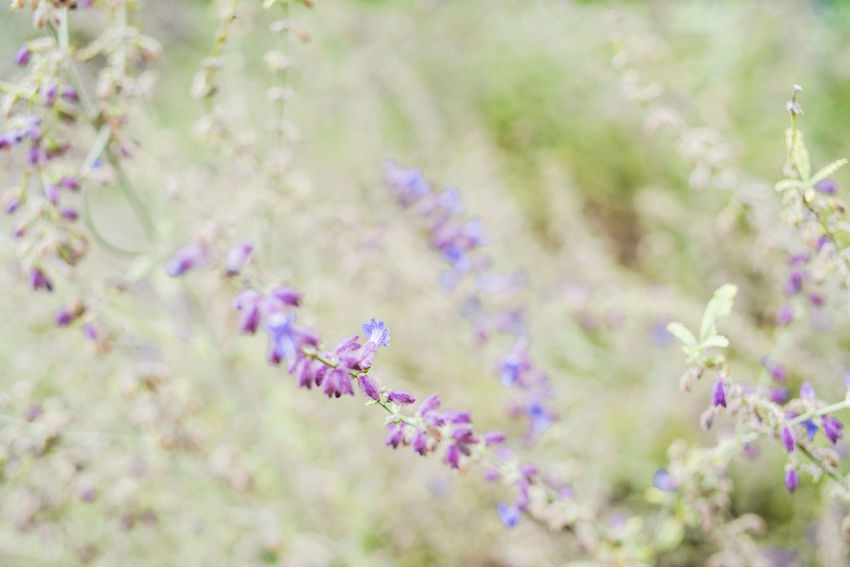 Autumn in Milan Beauty In Nature Branch Close-up Day Flower Flower Head Fragility Freshness Grass Growth Lavender Macro Nature No People Outdoors Plant Selective Focus Springtime