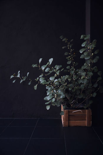 Plant Growth Plant Part Beauty In Nature Leaf Nature No People Flower Indoors  Flowering Plant Fragility Vulnerability  Close-up Night Freshness Wall - Building Feature Plant Stem Architecture