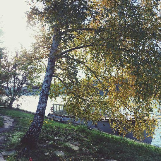Tree No People Nature Water Berlin Spree Boat Sun Spreeblick Funkhaus