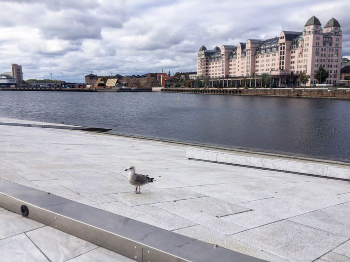 Seagull On Footpath By River In City