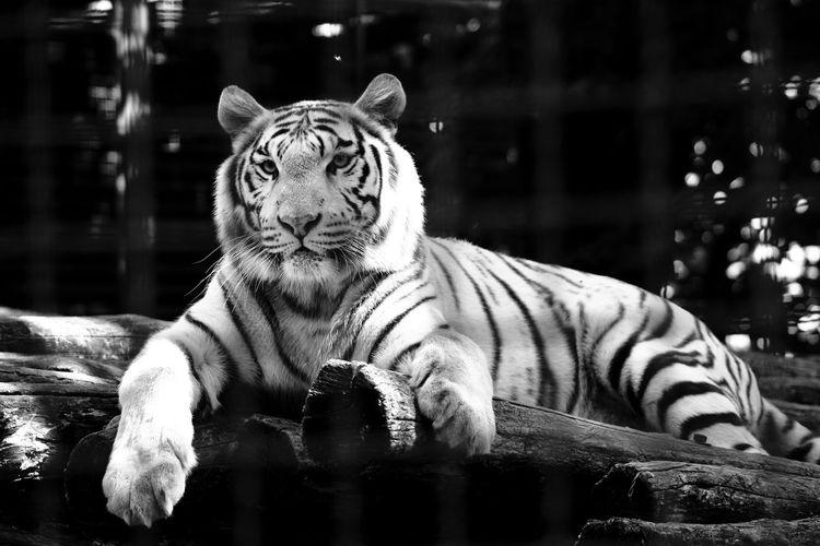 Cat in a zoo