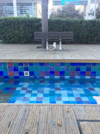 Swimming Pool Blue Water Day Tiled Floor Outdoors No People Built Structure