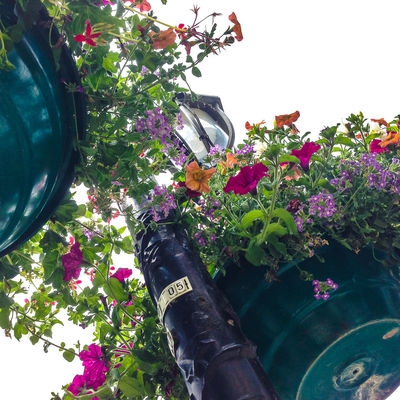 Flower pots hanging from lamppost City Cityscape France Lamp Post Plants 🌱 Flower Flowers Lamppost