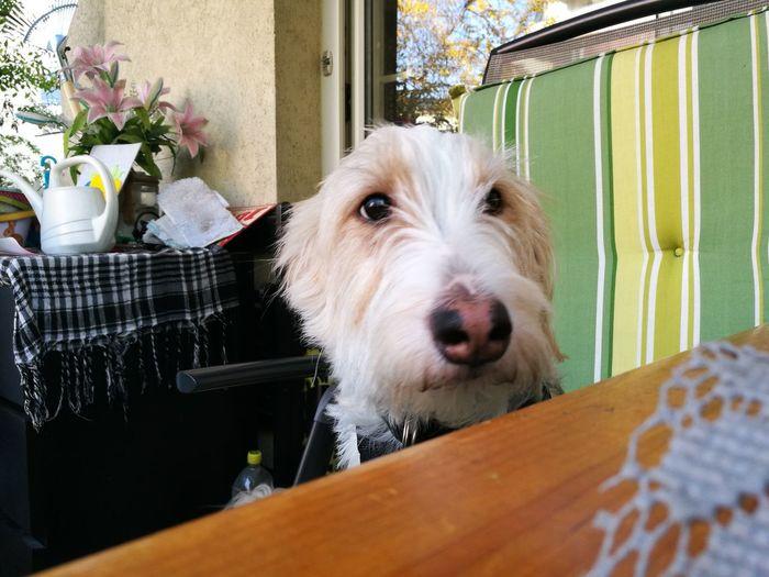 EyeEm Selects Pets Dog Portrait Looking At Camera