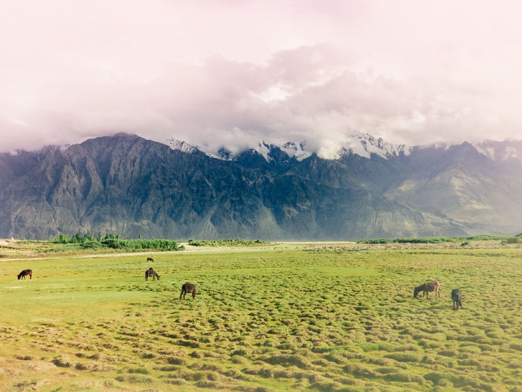 Horses grazing the open fields of Manali on a foggy morning Grazing Horses The Week on EyeEm Foggy Landscape Foggy Morning Panorama View Wide Angle View India Off The Beaten Path Travel Off The Beaten Path Copy Space Day Himalayas, India Travel Tourism Beauty In Nature Mountain Agriculture Rural Scene Sky Landscape Mountain Range Grass Cloud - Sky Snowcapped Mountain Snowcapped Grazing Herd Foggy