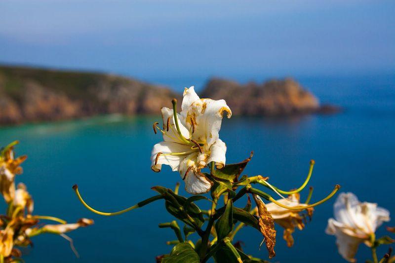 Minek Theatre Flowers Sea View